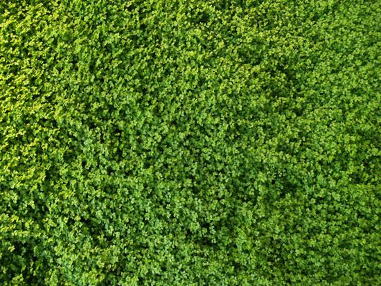 Giardino verticale Il Prisma – Milano