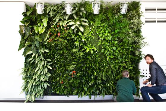 Giardino verticale showroom Sedus – Milano