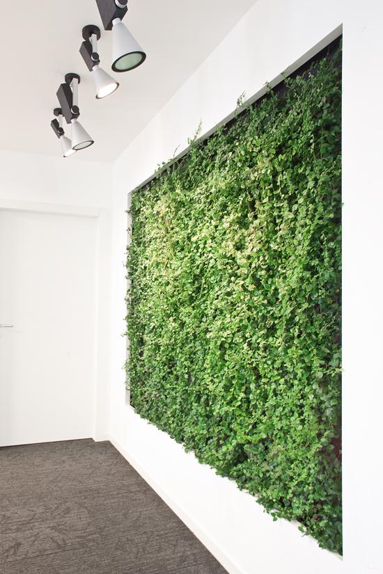 abbastanza Giardino verticale VDA Spa - Milano | EPIGEA TP84