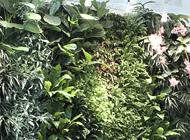 (ITA) Giardino verticale – RCS Periodici